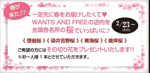 桜の花DM.jpg