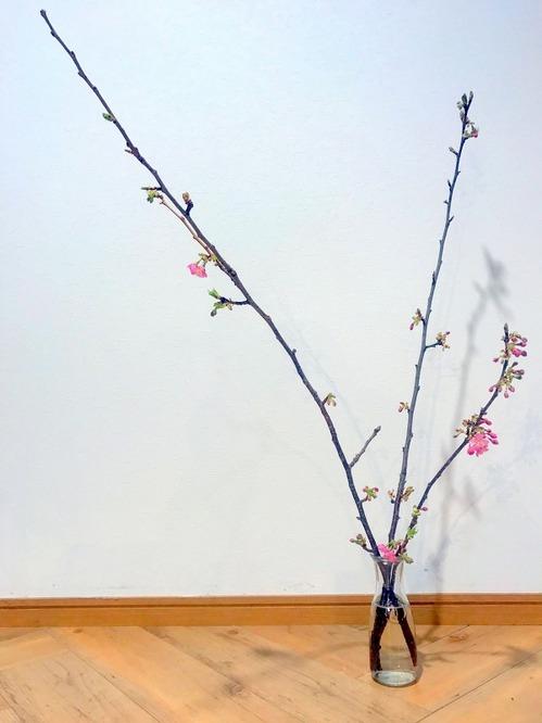 金岡撮影桜パート2.jpg
